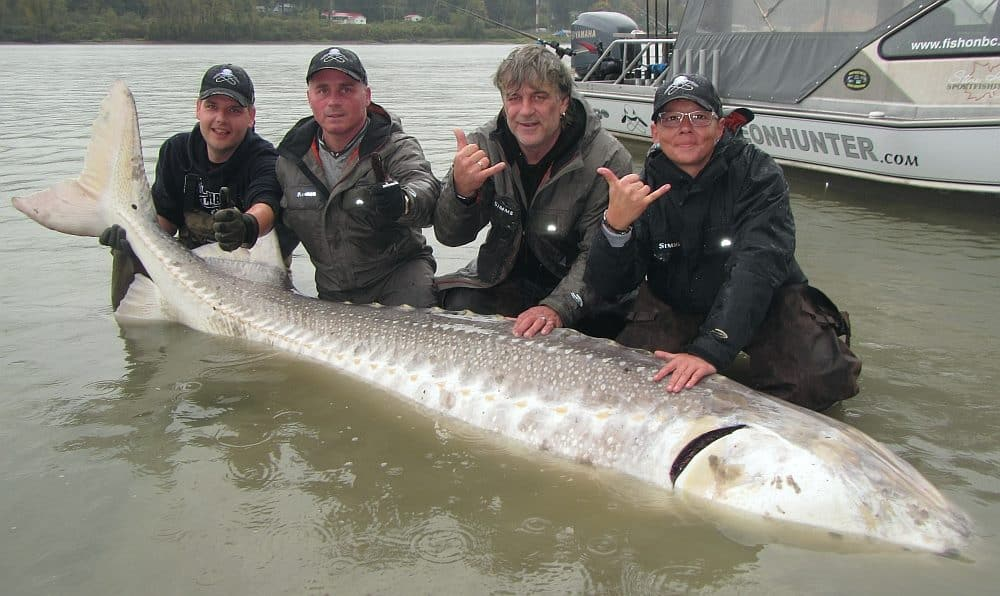 Top sturgeon fishing charters canada fraser river bc for Fishing trips in canada