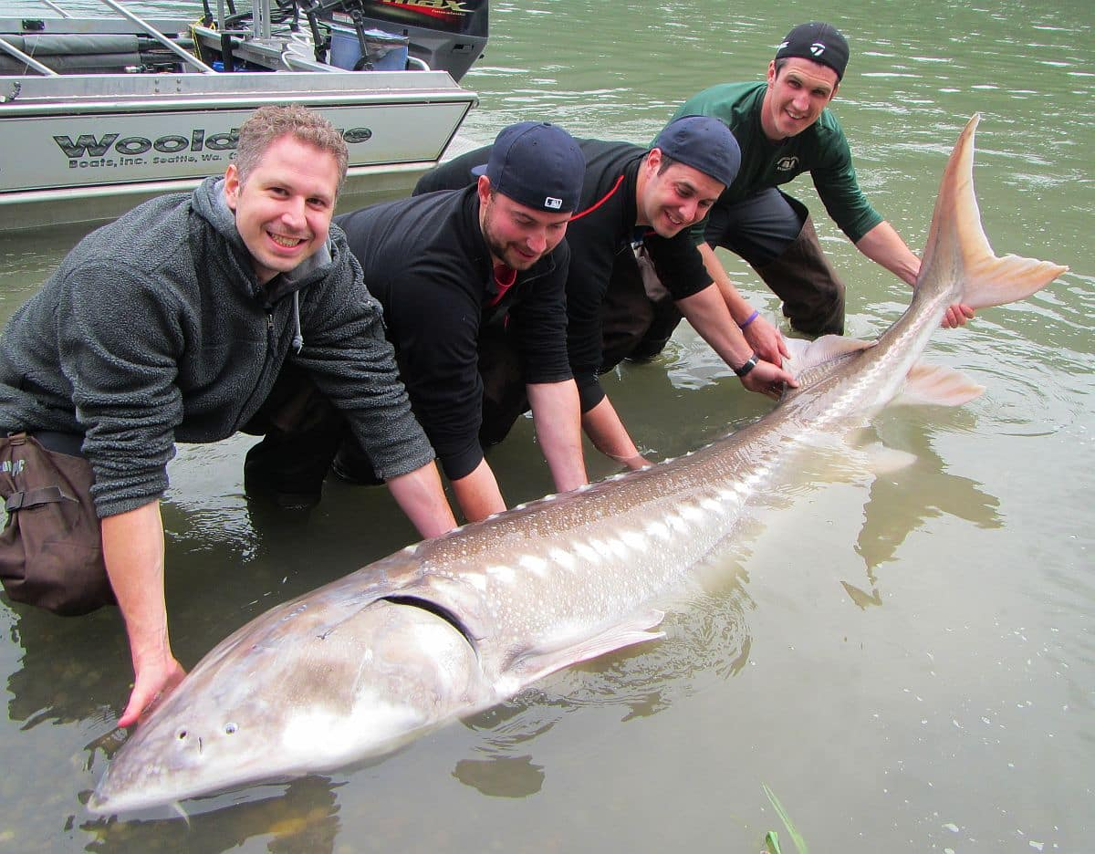 Sturgeon Fishing Photos